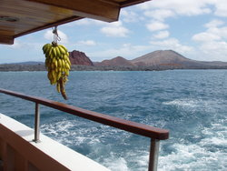 bananas on boat