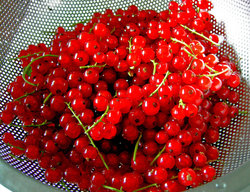 bright red currants