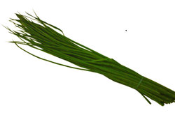 bundle of chives