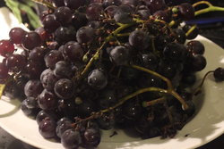 Cluster of black grapes