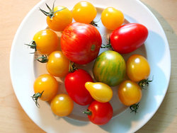 colourful tomatoes.