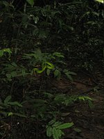 Dark jungle with snake