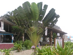 fan palm at restaurant