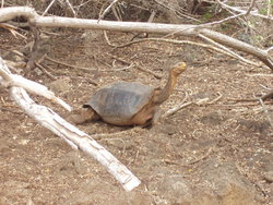 funny land turtle