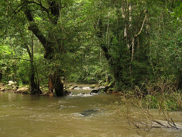 Green forest and river - free image