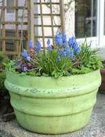 green pot with blue flowers