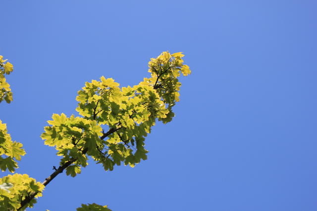 Green yellow leaves - free image