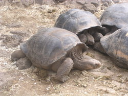 lazy cuddling turtles