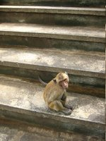 Monkey sitting on steps