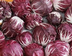 red chicory lettuce