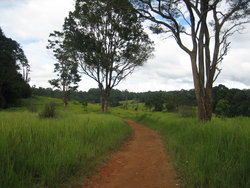 road in savanna