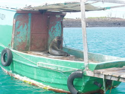 Sea lion riding a  boat