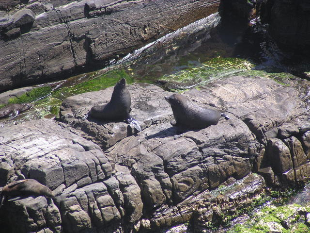 Seals taking sun - free image