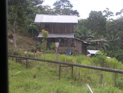 simple house in jungle