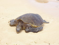 tortoise in the sea side