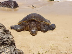 turtle in seashore