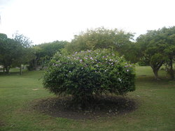 well- trimmed bush